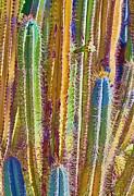 Cactus Print by Marcia Colelli