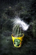 Rain Drops Art - Cactus With Feather by Joana Kruse