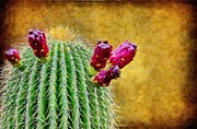 Wax Digital Art Posters - Cactus with Flowers Poster by Jeff Kolker
