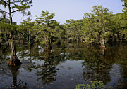 East Texas Posters - Caddo Lake Bayou 4 Poster by Paul Anderson