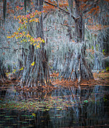 Humans Posters - Caddo Lake Fall Poster by Inge Johnsson