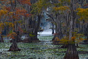 Autumn Colors Posters - Caddo Lake Morning Poster by Snow White