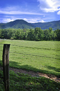 George Taylor - Cades Cove 1