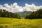 Gsmnp Prints - Cades Cove Great Smoky Mountains National Park - Gold and Blue Print by Dave Allen