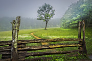 Fences Prints - Cades Cove Misty Tree Print by Debra and Dave Vanderlaan