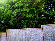 Bamboo Fence Art - Caged By Their Own by Peter LaPlaca