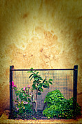 Grate Photo Metal Prints - Caged Metal Print by Silvia Ganora