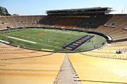 Cal Bear Prints - Cal Golden Bears California Memorial Stadium Berkeley California 5D24695 Print by Wingsdomain Art and Photography