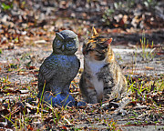Owl Picture Prints - Calico Cat and Obtuse Owl Print by Al Powell Photography USA
