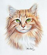 Color Pencil Drawings - Calico Cat by Lena Auxier