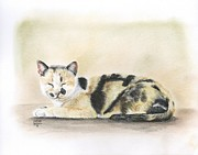 Kitty Pastels Posters - Calico Poster by Heather Gessell
