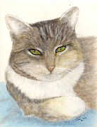 Feline Paintings - Calico Tabby Cat Feline Pets Animal Art by Cathy Peek