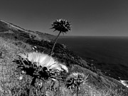 Big Sur Ca Metal Prints - California - Big Sur 002 Metal Print by Lance Vaughn