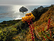 Flowered Prints - California - Big Sur 006 Print by Lance Vaughn