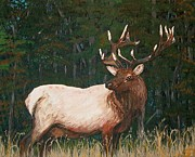 Antler Paintings - California Bull Elk by Sharon Duguay