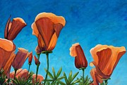 California Poppy Paintings - California Closeup by Terry Taylor