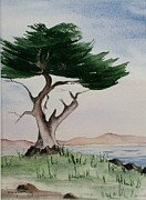 Lone Tree Painting Framed Prints - California Cypress Framed Print by Penny Stroening