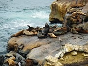 California Sea Lions Photos - California Dreaming by Mary Machare