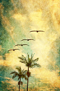 Palm Trees Mixed Media Prints - California Dreamn Print by David Schrader