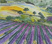 Bath Paintings - California lavender by Connie Lynn Pico