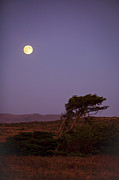 Nightime Posters - California Moon Poster by Diane Diederich
