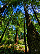 Golden Gate National Recreation Area Photos - California - Muir Woods 004 by Lance Vaughn