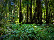 Golden Gate National Recreation Area Photos - California - Muir Woods 007 by Lance Vaughn