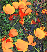 Jim Pavelle - California Poppies