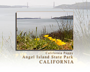 Sausalito Prints - California Poppies Overlook Golden Gate Bridge - Angel Island State Park California HK Print by David Rigg