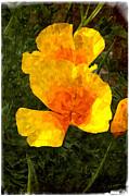 Mick Anderson - California Poppy Fantasy