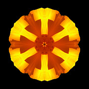 California Poppy Flower Mandala Print by David J Bookbinder