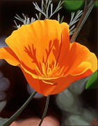 Photorealistic Posters - California Poppy Poster by Sharon Von Ibsch