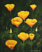 Multicolor Paintings - California poppy by Veikko Suikkanen