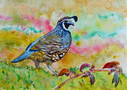 Yellow Beak Painting Metal Prints - California Quail Metal Print by Beverley Harper Tinsley