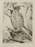 Quail Paintings - California Quails Lithograph by Derrick Higgins
