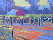 Calistoga Posters - California Vineyard Poster by Kip Decker