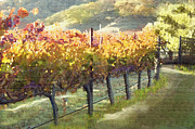 Grapevines Painting Prints - California Vineyard Series Morning in the Vineyard Print by Author and Photographer Laura Wrede