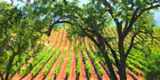 Wines Prints - California Vineyard Wine Country 5D24519 long Print by Wingsdomain Art and Photography