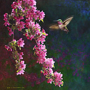 R christopher Vest - Caliope Hummingbird With...