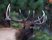 Bull Elk Prints - Call of the Wild Print by Shane Bechler