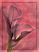 Calla Lilly Digital Art Posters - Calla Lilly Poster by Frederick Kenney