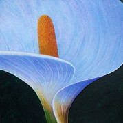 Calla Lilly Mixed Media Posters - Calla Lilly Poster by Tim Towler