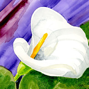 Calla Lilly Painting Framed Prints - Calla Lily Close Up Framed Print by Annie Troe