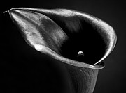 Landscape Greeting Cards Framed Prints - Calla Lily Flower Black and White Photograph Framed Print by Artecco Fine Art Photography - Photograph by Nadja Drieling