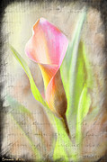 Bonnie Willis - Calla Lily in Pink