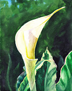 Birthday Cards Painting Originals - Calla Lily by Irina Sztukowski