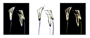 Botanicals Mixed Media Originals - Calla Lily Triptych by Cheryl Hrudka