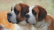 Illustrator Metal Prints - Calling All St Bernards Metal Print by Liane Wright