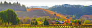 Sonoma County Vineyards. Prints - Calm Agrarian Lifestyle Print by Tirza Roring