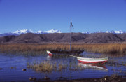 Reed Bed Prints - Calm day on Lake Titicaca Print by James Brunker